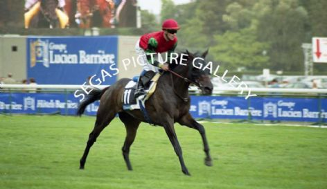 Racehorse Sai Si with Jockey Thierry Thulliez